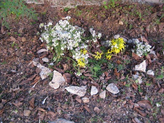 jardinage031.jpg