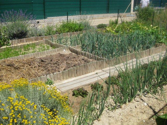 jardinenzo044.jpg